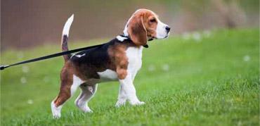 Dog-Walk02.jpg